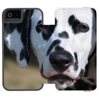 Filhote de cachorro Dalmatian doce