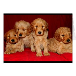 Filhote de cachorro de Goldendoodle algum cartão