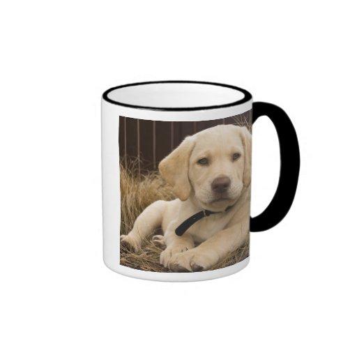 Filhote de cachorro de labrador retriever caneca