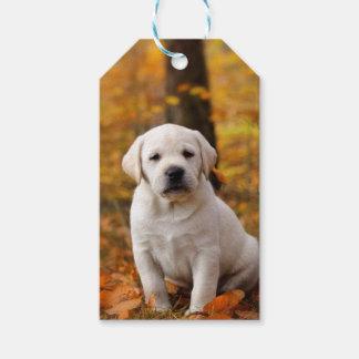 Filhote de cachorro de labrador retriever etiqueta para presente