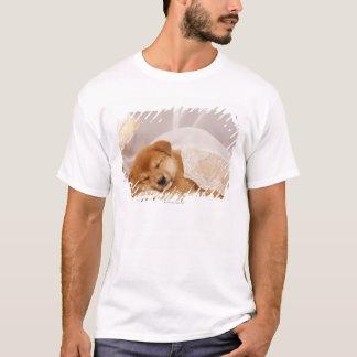 Filhote de cachorro de Shiba Inu que dorme sob uma Camiseta