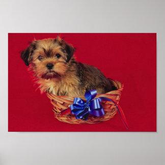 Filhote de cachorro de Shih Tzu no poster da cesta