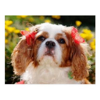 Filhote de cachorro descuidado com arcos cartão postal