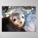 Filhote de cachorro do leão de mar, plazas de Isla Posters