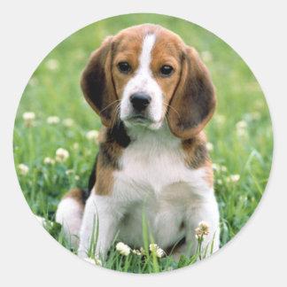 Filhote de cachorro do lebreiro adesivo em formato redondo