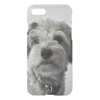 Filhote de cachorro do Schnauzer Capa iPhone 7