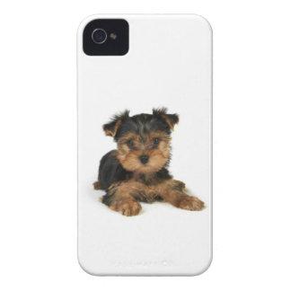Filhote de cachorro do yorkshire terrier capinhas iPhone 4