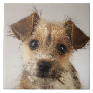 Filhote de cachorro (familiaris do Canis)