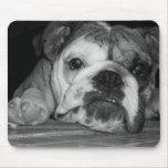 Filhote de cachorro inglês preto e branco do buldo mousepad