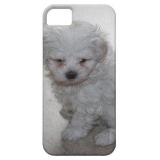 filhote de cachorro maltês capas para iPhone 5