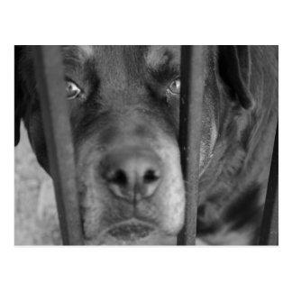 Filhote de cachorro pobre cartao postal