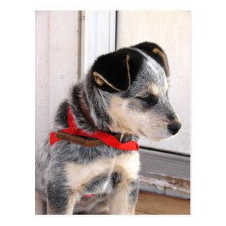 Filhote de cachorro Poised Cartão Postal