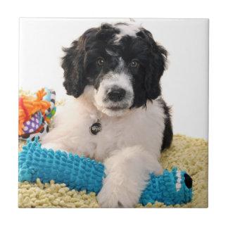 Filhote de cachorro português do cão de água com