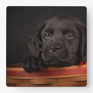Filhote de cachorro preto de labrador retriever em relógios para paredes