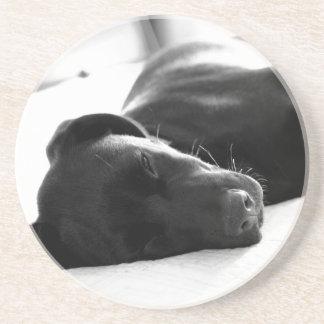 Filhote de cachorro sonolento de labrador porta copos de arenito