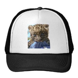 Filhote do leopardo boné