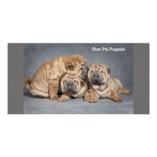 Filhotes de cachorro bonitos de Shar Pei Cartão Com Foto