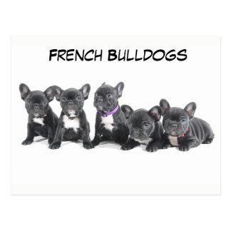 Filhotes de cachorro bonitos do buldogue francês cartão postal