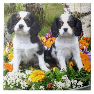 Filhotes de cachorro do Spaniel de rei Charles Azulejo Quadrado Grande