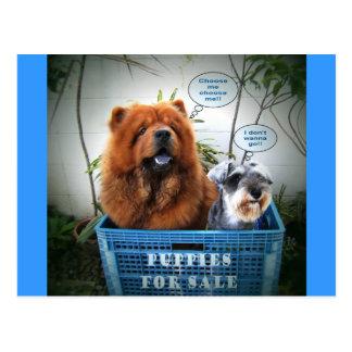 Filhotes de cachorro para a venda cartão postal
