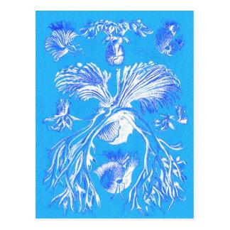 Filicinae no fundo azul cartão postal