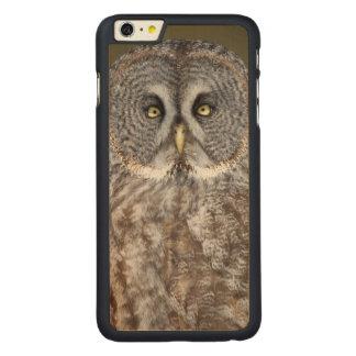 Fim-acima da coruja de grandes cinzas, Canadá Capa Para iPhone 6 Plus De Carvalho, Carved®