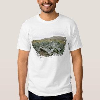Fim-acima de plantas de deserto, Presidio, Texas, Tshirt