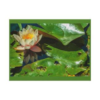 fim-acima de um florido waterlily no impressão das