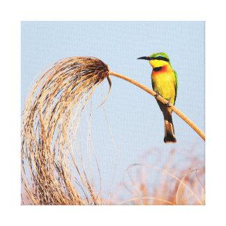 Fim-acima de um pássaro pequeno do abelha-comedor impressão de canvas envolvida