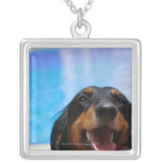 Fim-acima de uma ânsia do cão do Dachshund Colares Personalizados