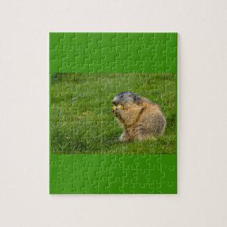 fim-acima de uma marmota sociável no quebra-cabeça