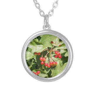 Fim-acima do opulus do viburnum das folhas e das colar banhado a prata