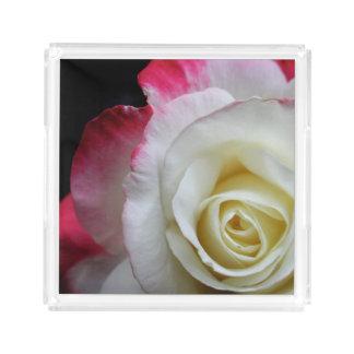 Fim bonito da bandeja acima de um rosa vermelho e