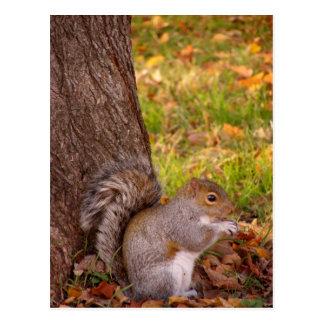 Fim bonito do esquilo acima do cartão