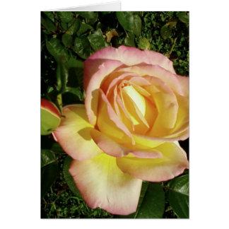 Fim cor-de-rosa do rosa amarelo acima do papel de  cartão