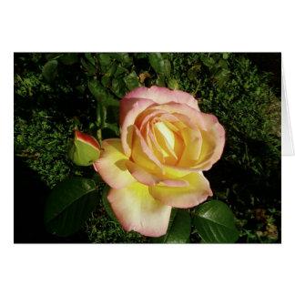 Fim cor-de-rosa do rosa amarelo acima do papel de  cartões