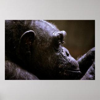Fim da cabeça do chimpanzé acima do poster
