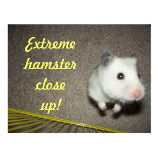 Fim extremo do hamster acima do cartão