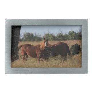 Fivela de cinto quadrada dos cavalos de Kansas
