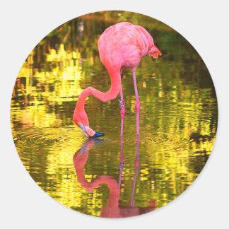 Flamingo americano adesivo redondo