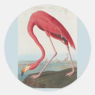 Flamingo americano por John James Audubon 1838 Adesivo Redondo
