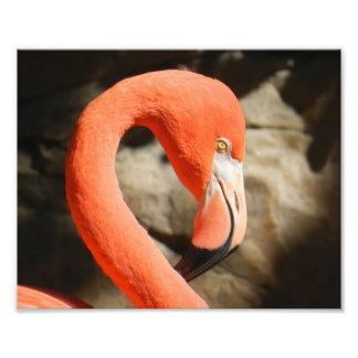 Flamingo Impressão De Foto