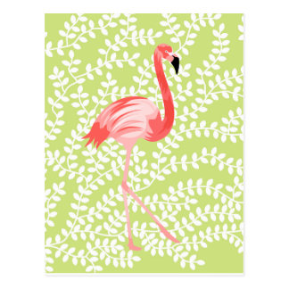 Flamingo Cartão Postal