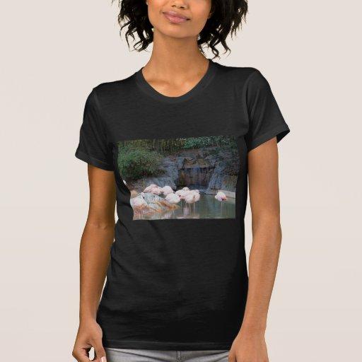 Flamingo e cachoeira camiseta