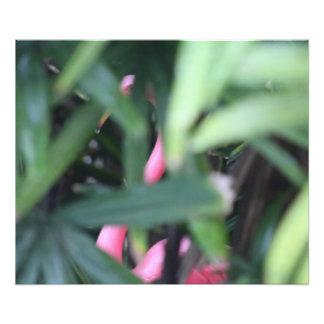 Flamingo… manchado impressão de foto