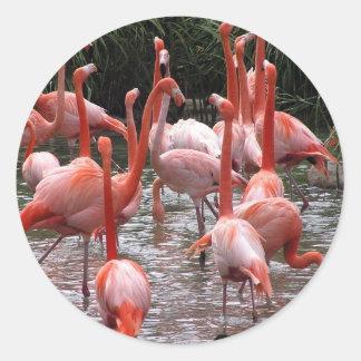 Flamingos de Florida Adesivo