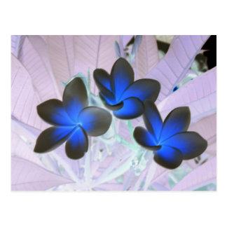 Flor à moda azul cartao postal