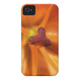 Flor acima 7 próximos mf capa para iPhone