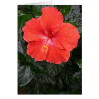 Flor alaranjada do hibiscus cartão comemorativo