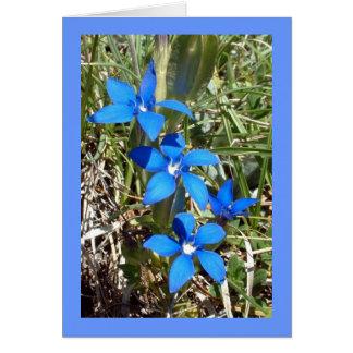 Flor alpina da genciana azul -- Cartão de